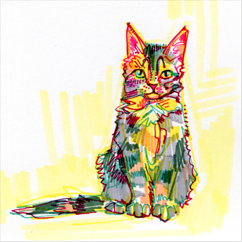 Maine Coon cat drawing