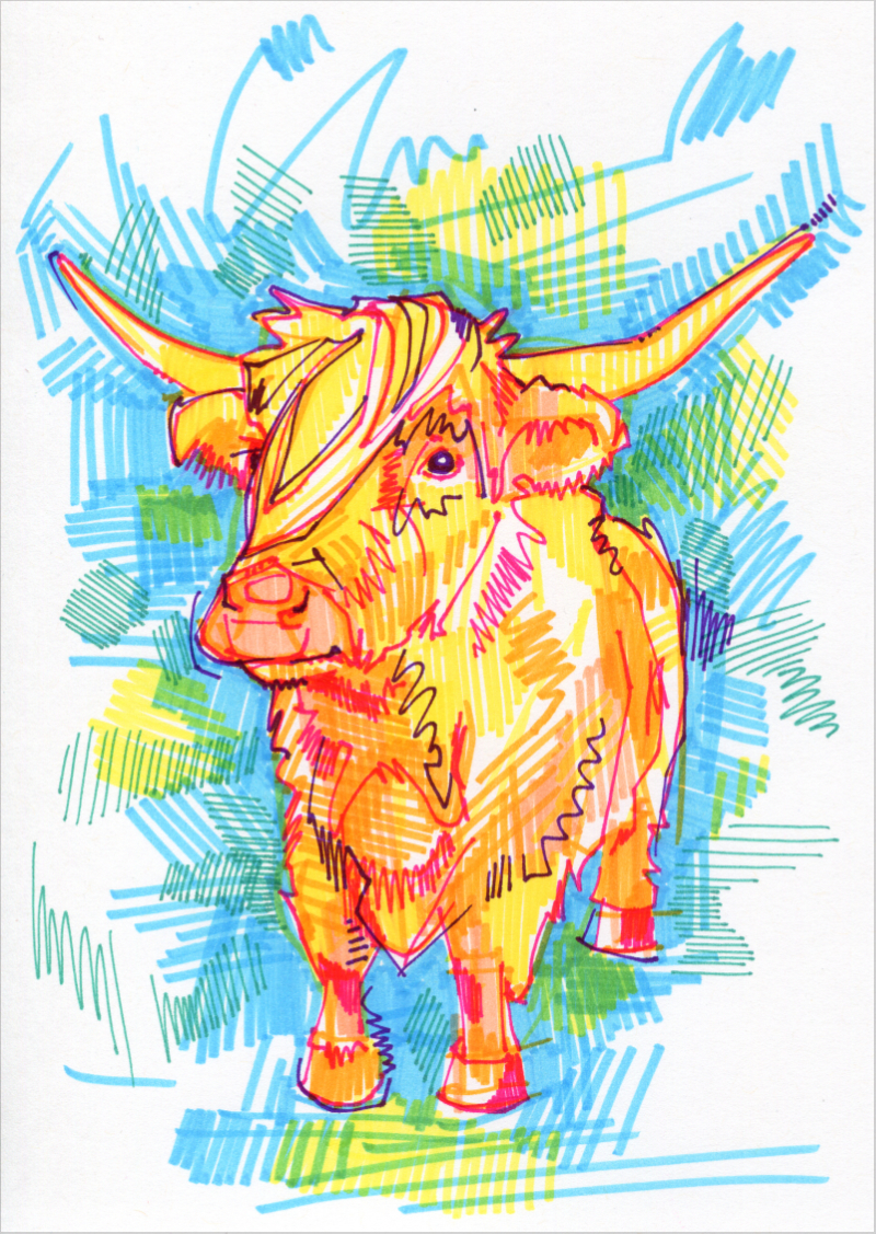 Highland Cow colorful drawing