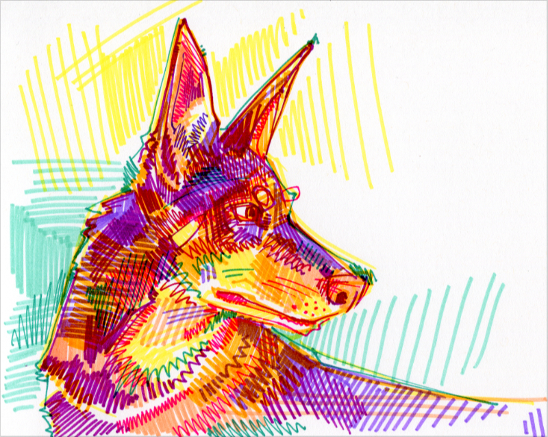 kelpie australien illustration