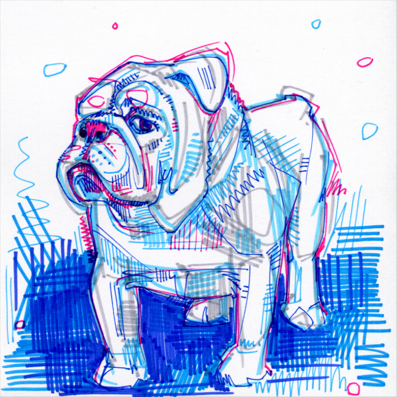 bulldog anglais illustration