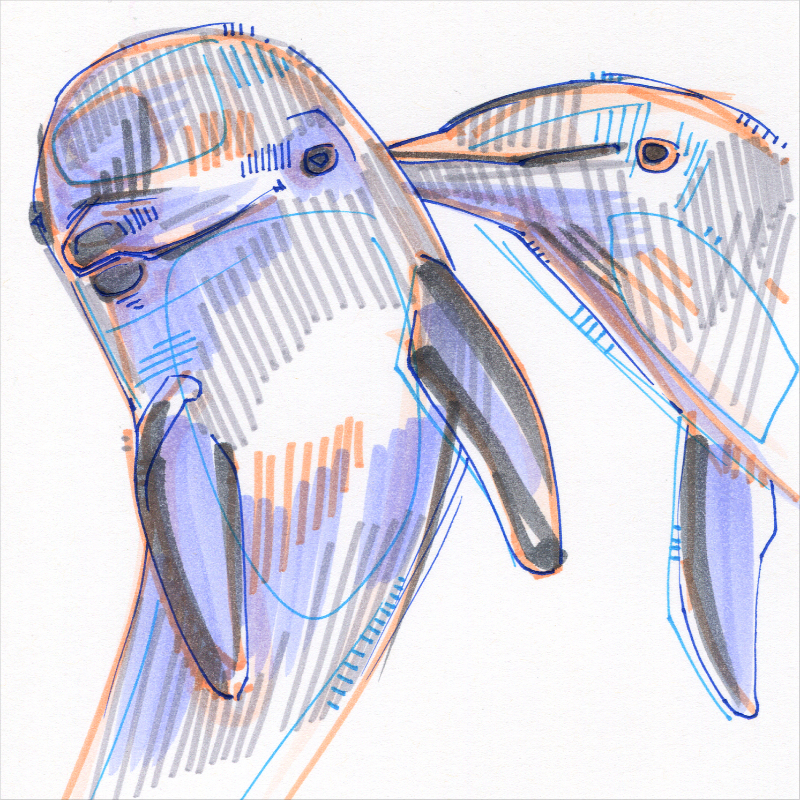 dolphin colorful drawing