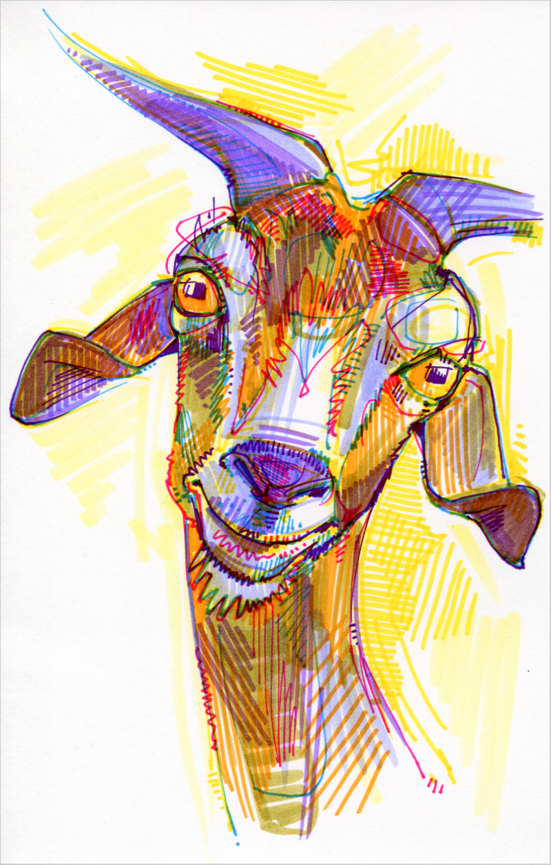 goat artwork, crosshatched and colorful