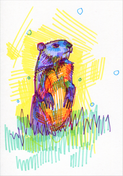rainbow groundhog drawing by Gwenn Seemel