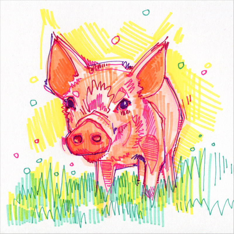 piglet colorful drawing