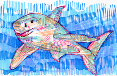 shark illustration by wildlife artist Gwenn Seemel