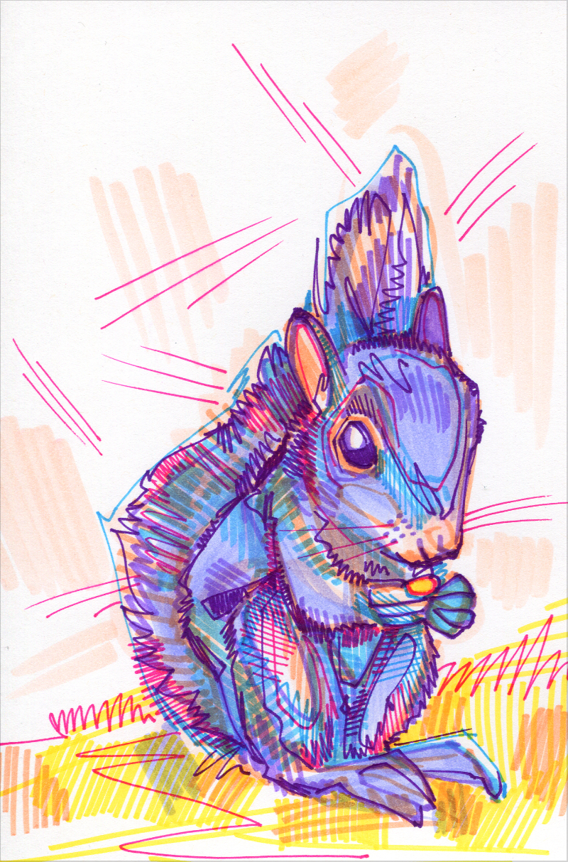 squirrel colorful drawing