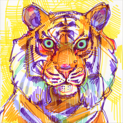 tiger illustration by wildlife artist Gwenn Seemel