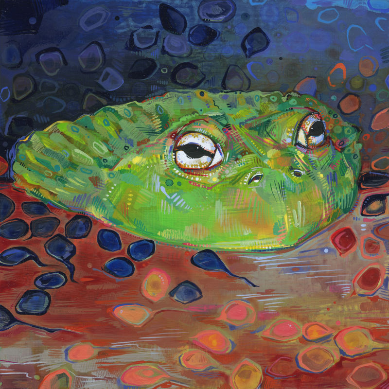 painting of an African bullfrog with his tadpoles