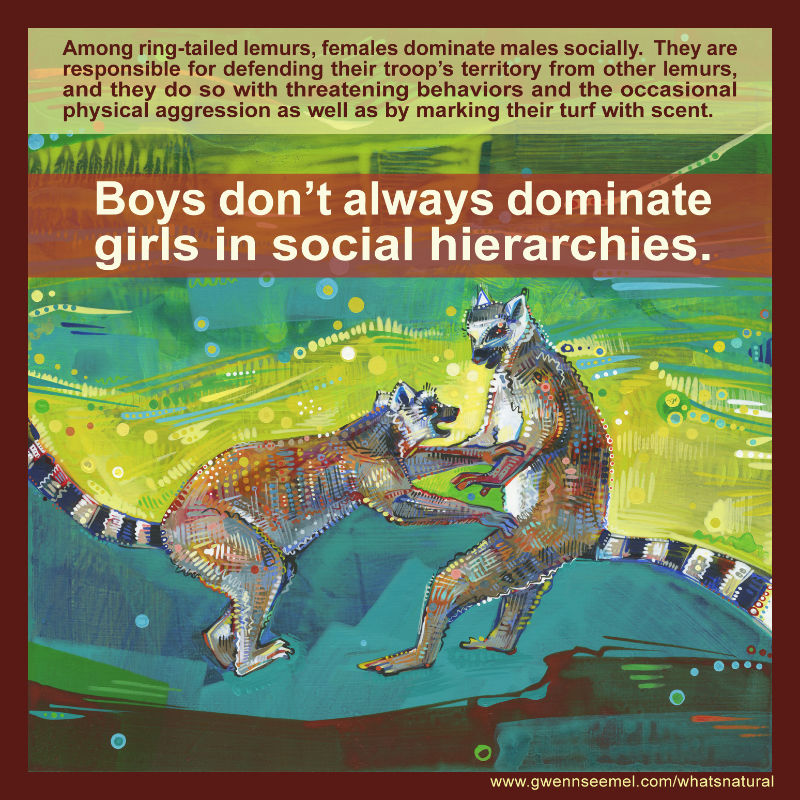 boys don't always dominate girls in social hierarchies