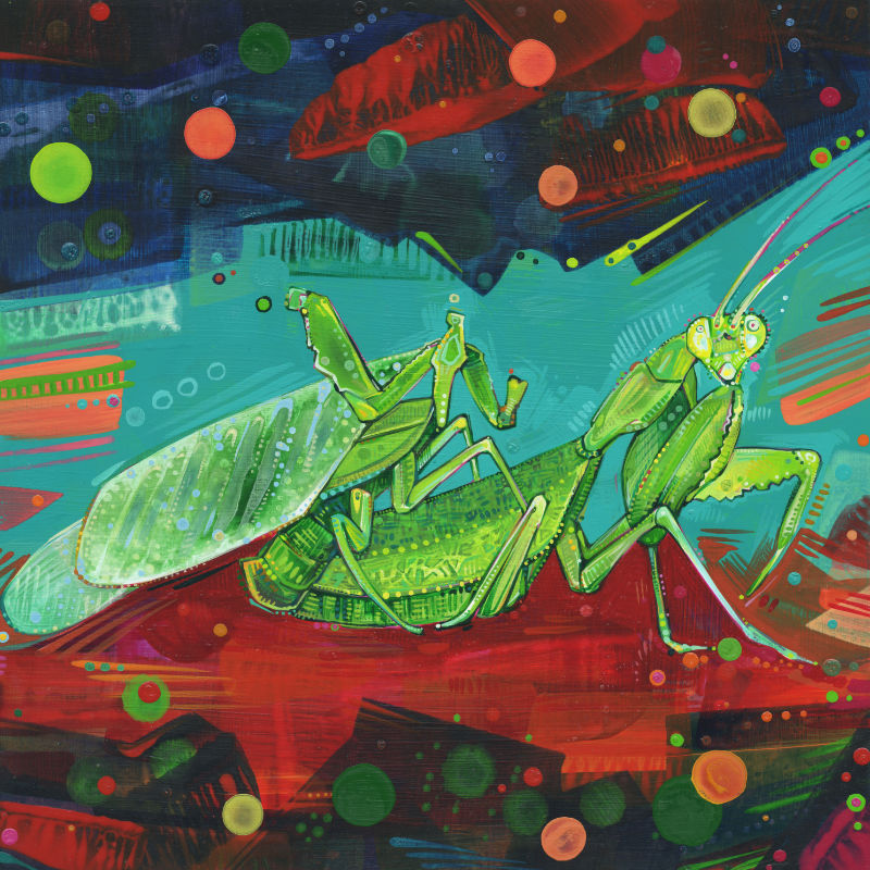 painting of African mantis mating
