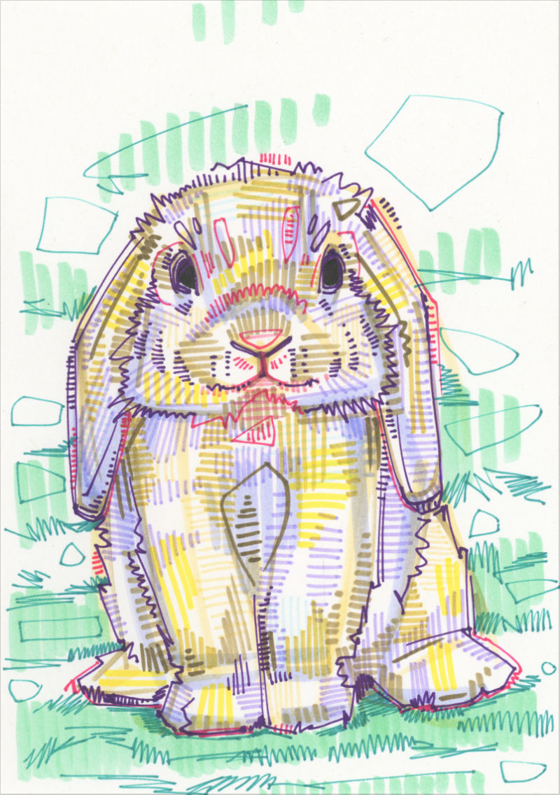 drawing of a Holland Lop