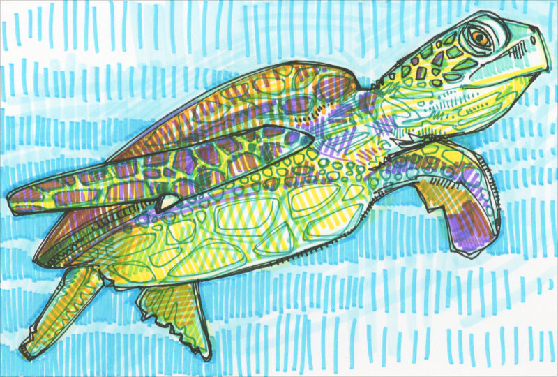 colorful sea turtle illustration