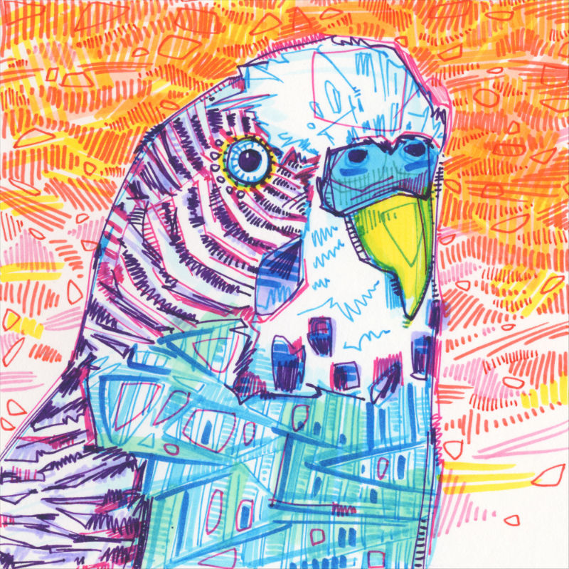 drawing of a blue parakeet on an orange background