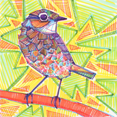 sparrow marker drawing by wildlife artist Gwenn Seemel