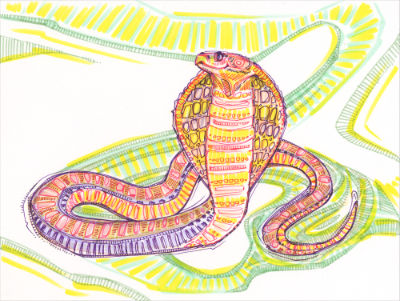 artwork for sale, marker drawing of a cobra