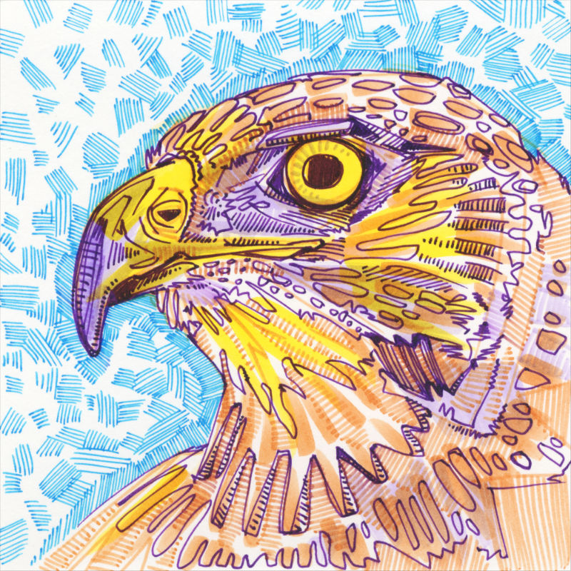 a colorful crosshatched drawing of the profile of a hawk's face
