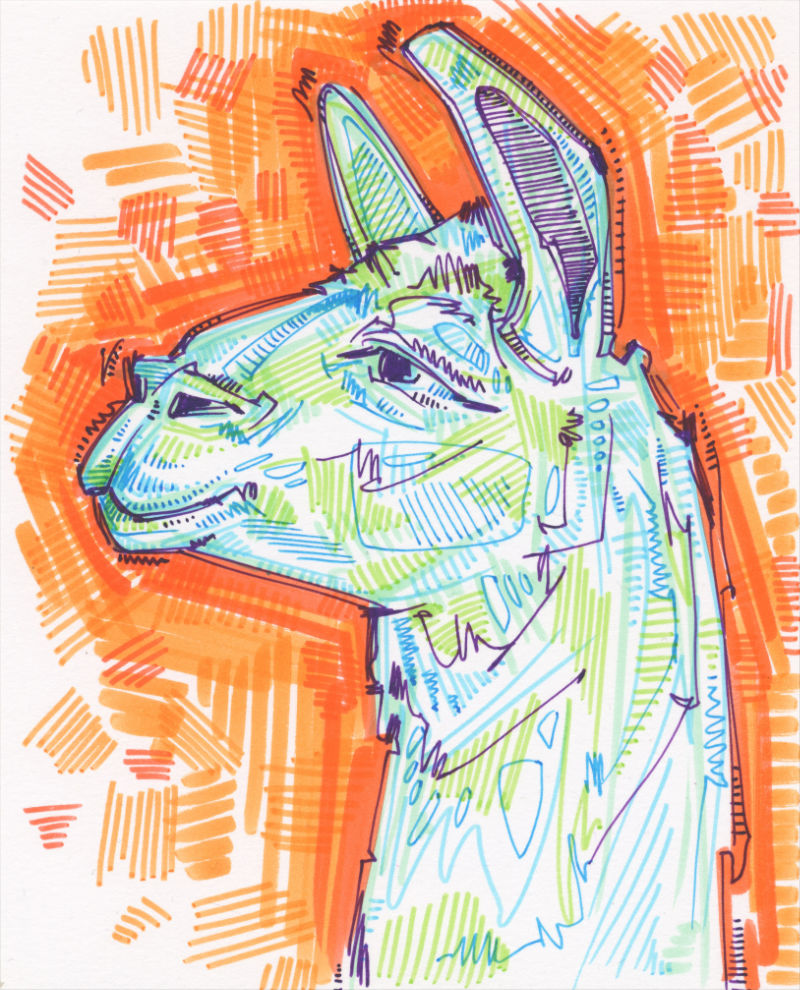 marker drawing of the profile of a llama