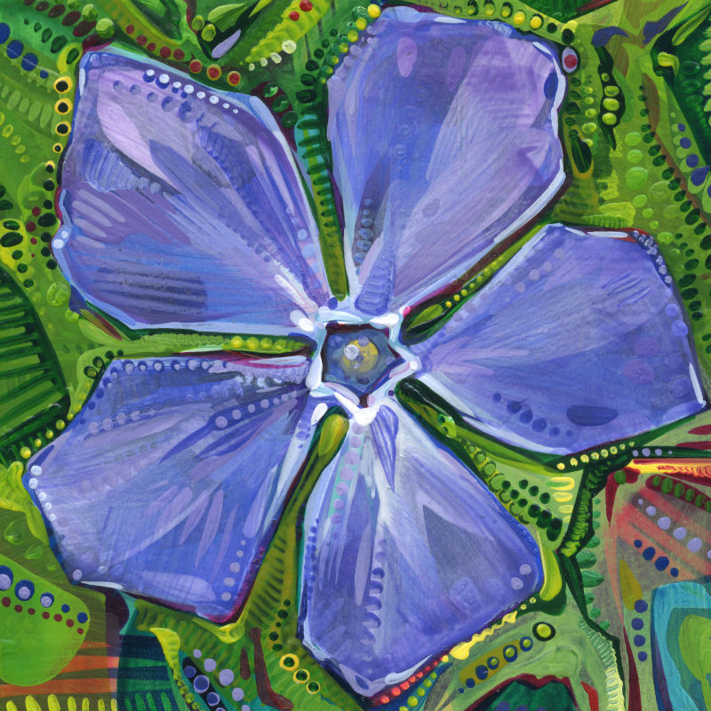 a purpley blue periwinkle flower seen from above